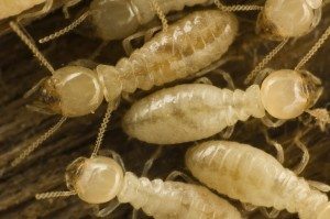 Termites in Deck, When to replace your deck, CK's Windows and Doors